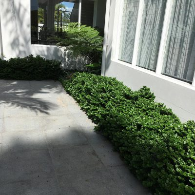 Paving, plant selection, horticulture and garden lighting in Florida Gardens.