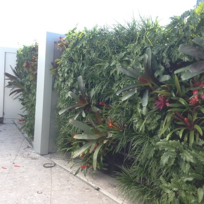Vertical garden and greenwall in Surfers Paradise.